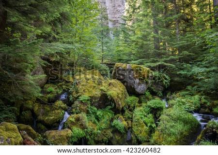 Watson Falls Trail, Umpqua National Forest, Oregon, USA - stock photo