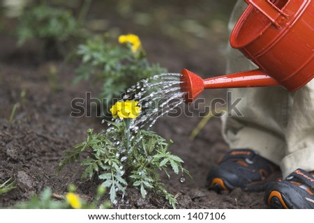 wattering flower - stock photo