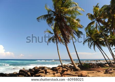 Waving palmtrees - stock photo