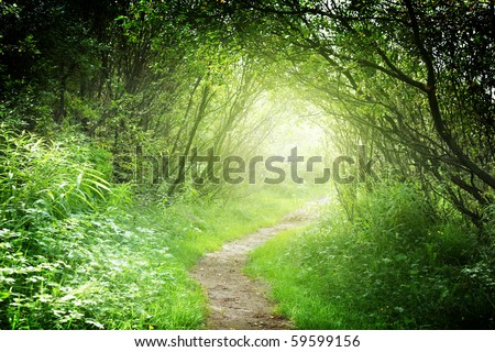 way in deep forest - stock photo