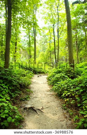 way in green forest near the trees