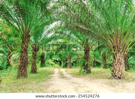 Way in oil palm plantation - stock photo