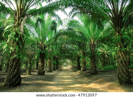 way in plantation - stock photo