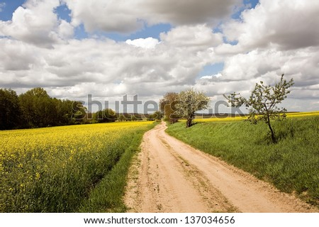 Way in the rapeseed field - stock photo