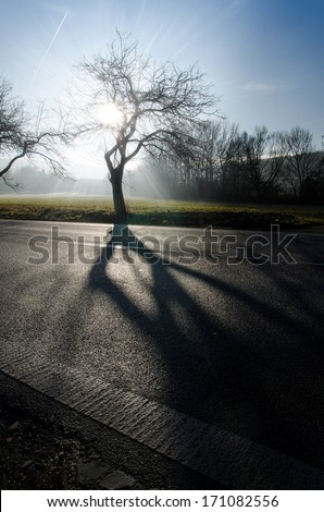 Way of trees in the field with abstract shadow, outdoors and nature, sky and clouds  - stock photo