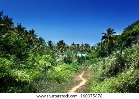 way to beach in jungle, Phi-Phi island, Thailand - stock photo