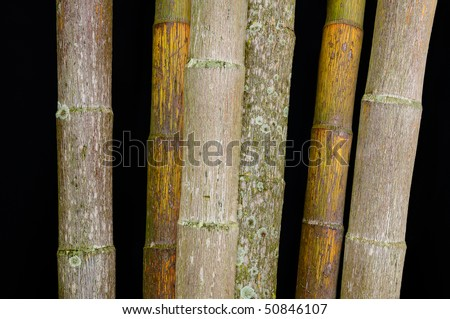 Weathered bamboo stems