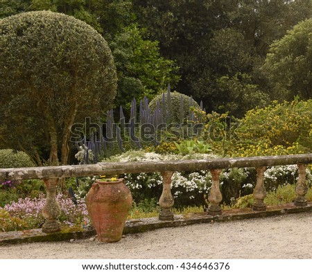 Weathered Ceramic Pot and Stone Balustrade with Yellow Flowering Acacia, Blue Echiums and an Olive Tree in a Garden on the Island of Tresco, England, UK - stock photo