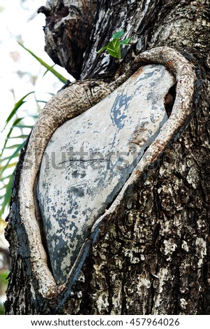 Weathered obsolete cracked textured wooden grunge background Heart tree - stock photo