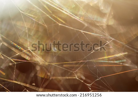 web in the sun blur background - stock photo