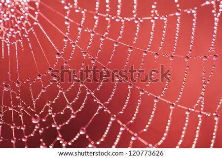 Web with dew drops on a red background - stock photo