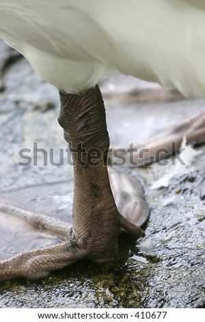 webbed foot