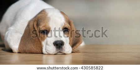Website banner of a cute dog puppy - stock photo