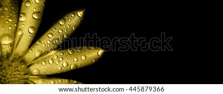 Website banner of a gold flower with water drops