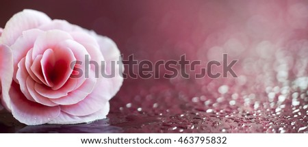 Website banner of a pink flower with copy space
