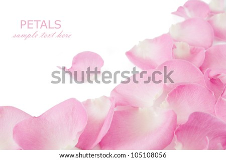 Wedding background with pink rose petals isolated on white - stock photo