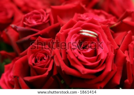 Wedding bands in red roses with a soft effect.