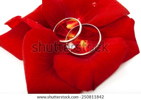 Wedding concept for invitation card. wedding rings in petals of rose flower isolated on white background - stock photo
