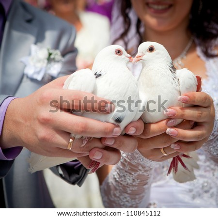 Wedding pigeons in hands of the groom and the bride - stock photo