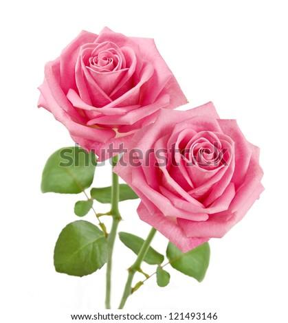 Wedding pink roses bunch isolated on white background - stock photo