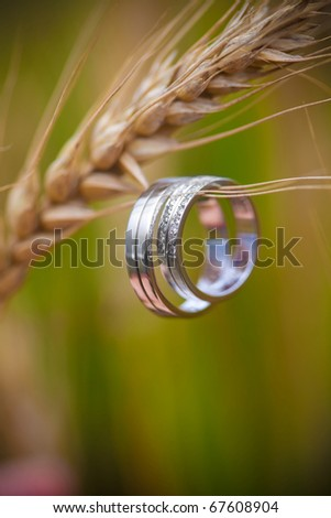 Wedding rings and wheat - stock photo
