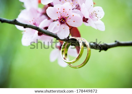 Wedding rings closeup with pink cherry flowers