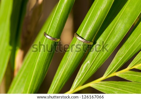 Wedding Rings on tropical palm leaf