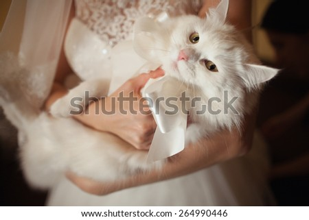 wedding white cat