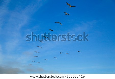 Wedge of pelicans - stock photo