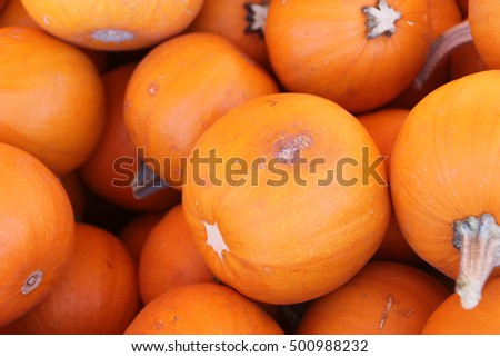 Wee Be Little Pumpkin, Cucurbita Pepo, small size smooth golden pumpkin smaller than 12 cm in size, used for cooking, carving and painting.