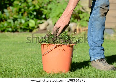 weed control in the garden - stock photo