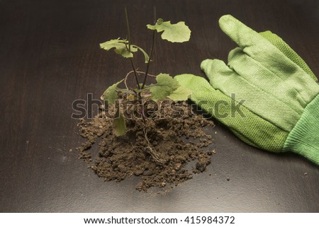 Weed from the garden and gardening accessories/Garden/Plant pulled from the earth with gardening tools - stock photo