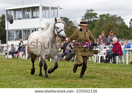 WEEDON, UK - AUGUST 28: A female competitor runs her champion horse up and down the arena edge for the judges to see during the grand parade at the Bucks County show on August 28, 2014 in Weedon.  - stock photo