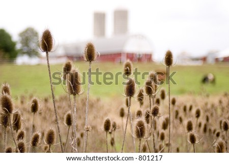 weeds - stock photo