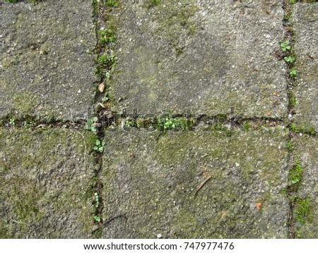Weeds growing in between tiles