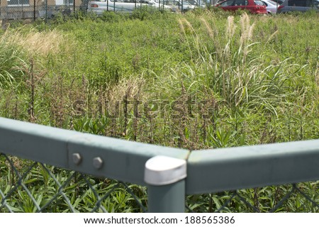 Weeds in a vacant lot