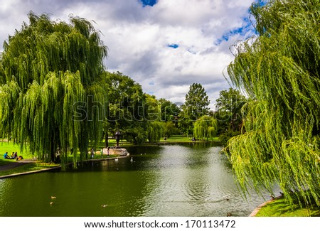 Weeping willow trees and a pond in the Boston Public Garden. - stock photo