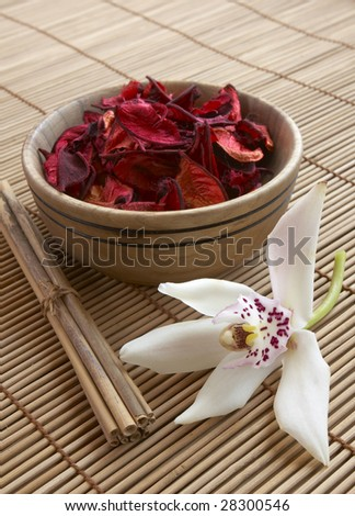 well being concept plants, soil and flower - stock photo