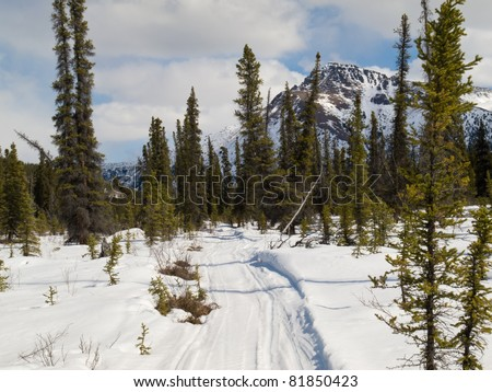 Well used winter trail in boreal forest (taiga) of Yukon Territory, Canada. - stock photo