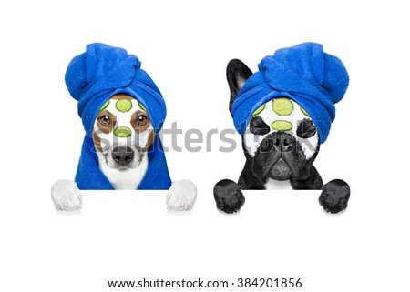 wellness dogs - stock photo