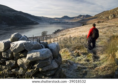 Welsh Walker - stock photo