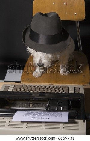 West Highland Terrier wearing a man's hat sitting on a chair in front of a typewriter - stock photo