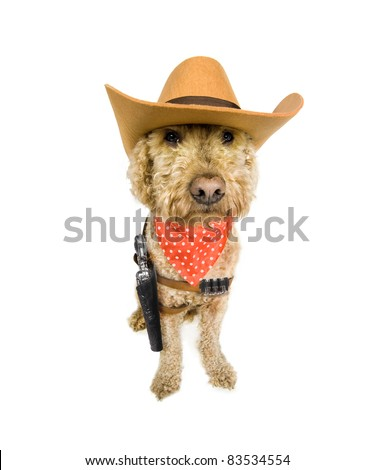 Western dog with an attitude - stock photo