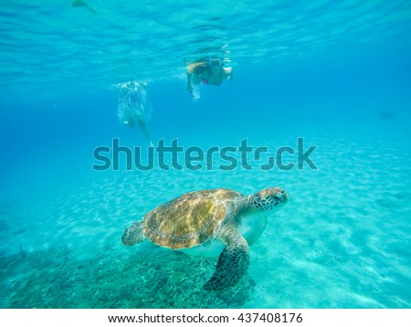 Westpunt - a small fishing village with turtles and schools of fish -  Curacao a small Caribbean Island in the Netherlands Antilles