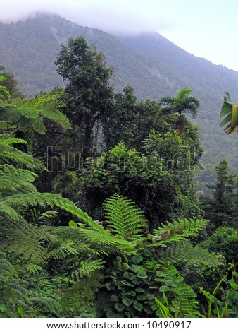 Wet dense lush vegetation in rainforest during wet season with mountains in background - stock photo