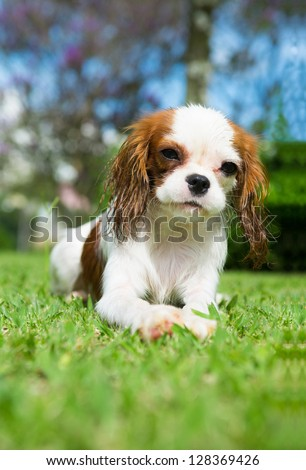 wet dog on the grass - stock photo