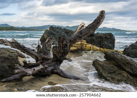 Wet driftwood on the beach surrounded by limestone rocks on the overcast day. - stock photo