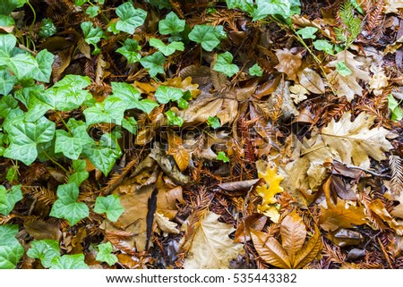 Wet fall leaves on the floor of a quiet forest in the fall