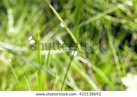 wet forest tree throught sunlight macro, drops of rain water on pine needle close up - stock photo