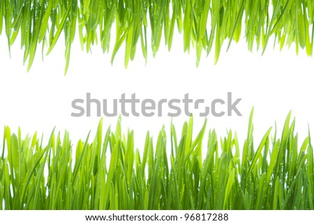Wet fresh green grass frame. Grass border isolated on white - stock photo